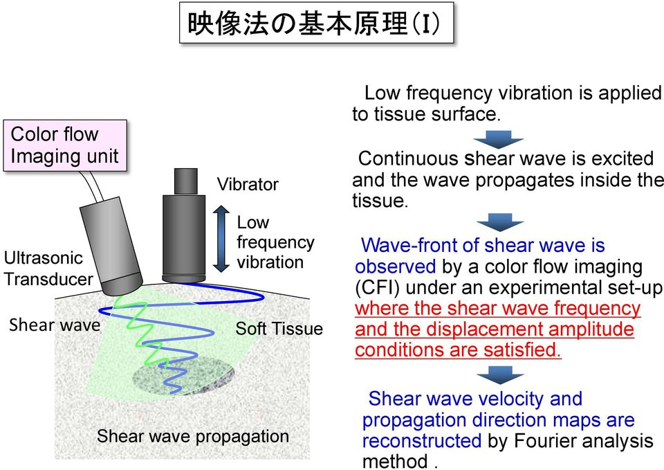 Wave-front of shear wave is observed by a color flow imaging (CFI) under an experimental set-up where the shear wave frequency and the
