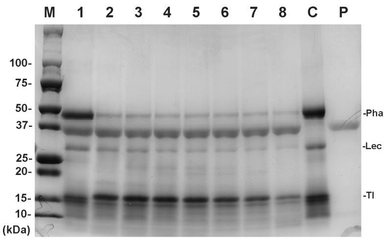 Fig. 3 Pepsin digestibility of proteins in roasted beans M: Molecular weight marker. Protein extract of roasted beans was incubated in simulated gastric fluid (SGF, 0.